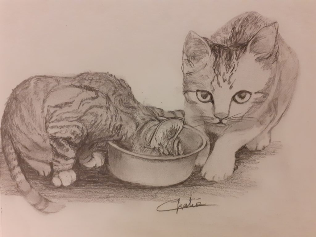 """""""Chatons"""" dessin 30x30"""